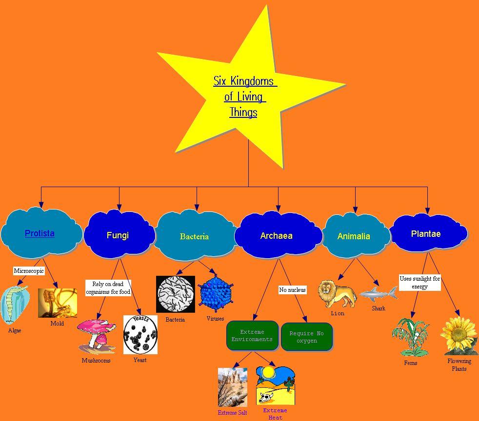 IT 365 (HOO2) Summer 2012: 6 Kingdoms of Living Things ...